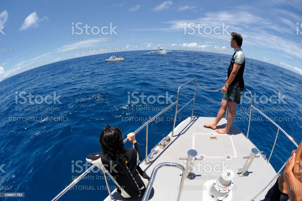 Looking for Dolphins in Ogasawara stock photo
