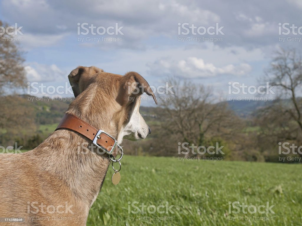 looking for prey stock photo