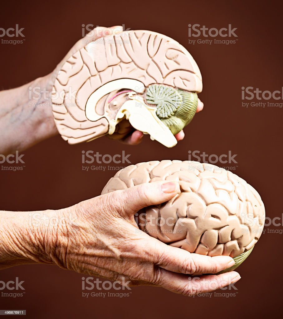 Looking for the cause of Alzheimers: wrinkled hands with brain royalty-free stock photo