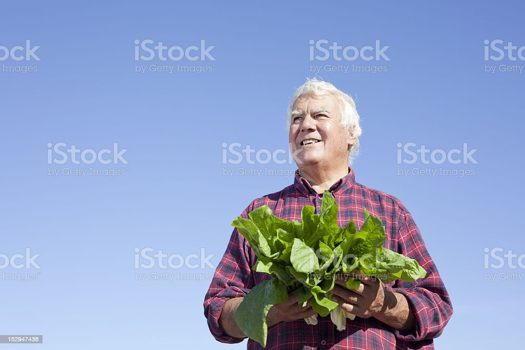 Looking future. royalty-free stock photo