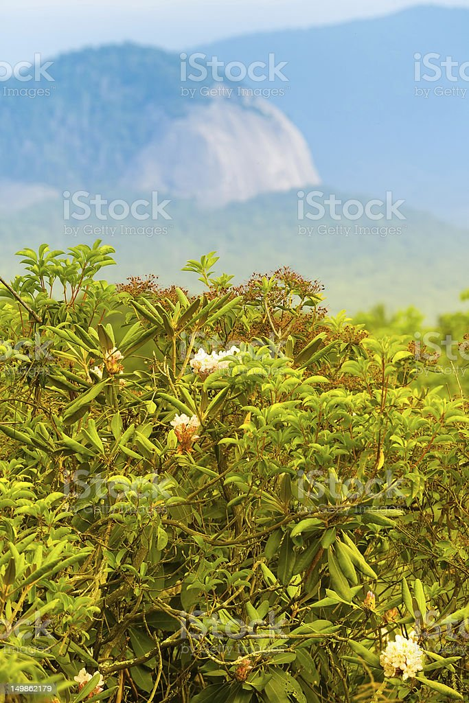 Looking Glass Rock behind Rhododendron stock photo