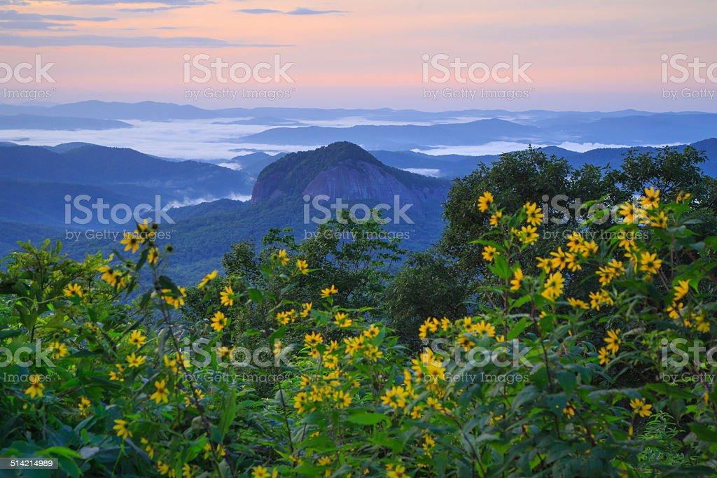 Looking Glass Rock Flowers - Sunrise Landscape stock photo