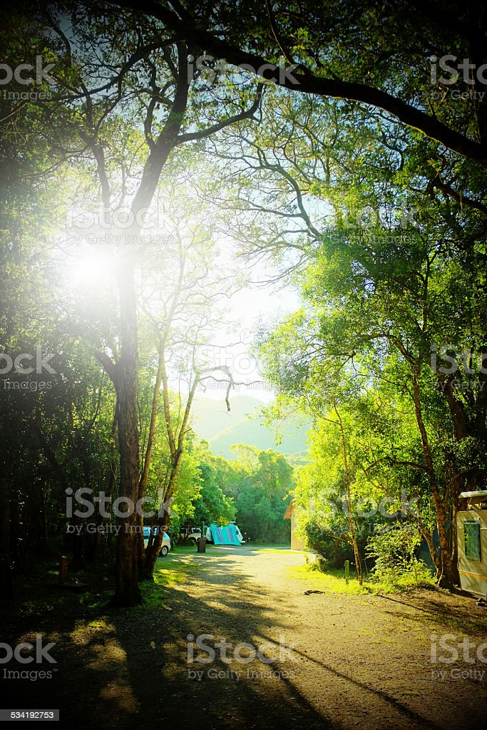 Looking like the Garden of Eden, a Tstitsikamma forest campsite stock photo