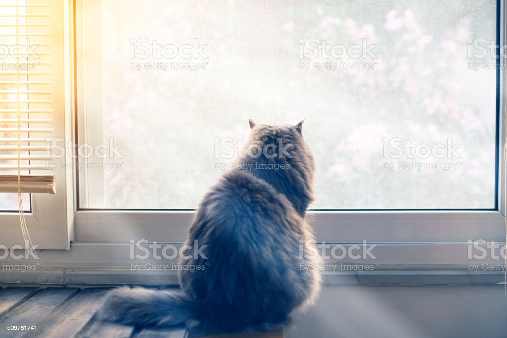 Looking out window stock photo