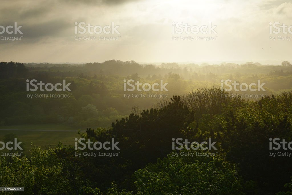 Looking over the forest royalty-free stock photo