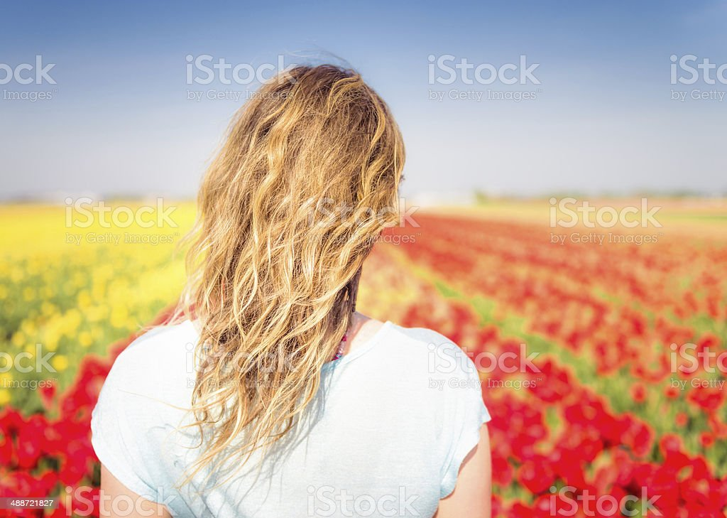 Looking over tulips stock photo