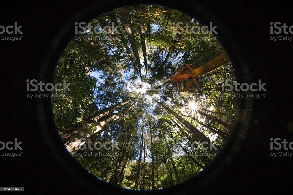 Looking skyward through trees stock photo