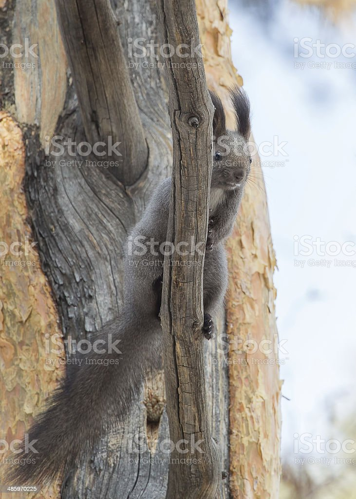 looking squirrel stock photo