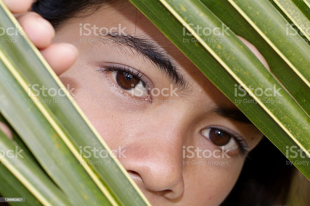 Looking through a palm leaf royalty-free stock photo