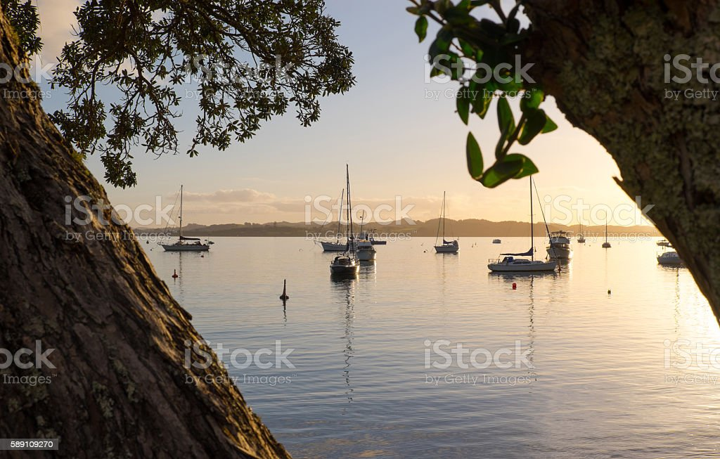 Looking through the Pohutukawa trees at Russell, New Zealand, NZ stock photo