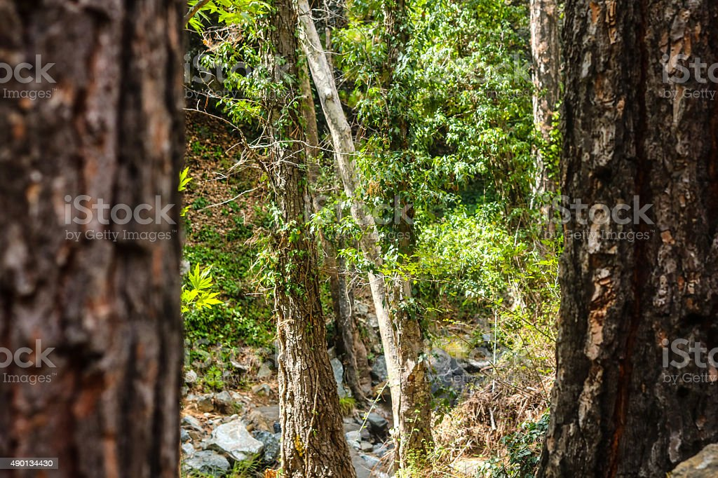 Looking Through the Trees royalty-free stock photo