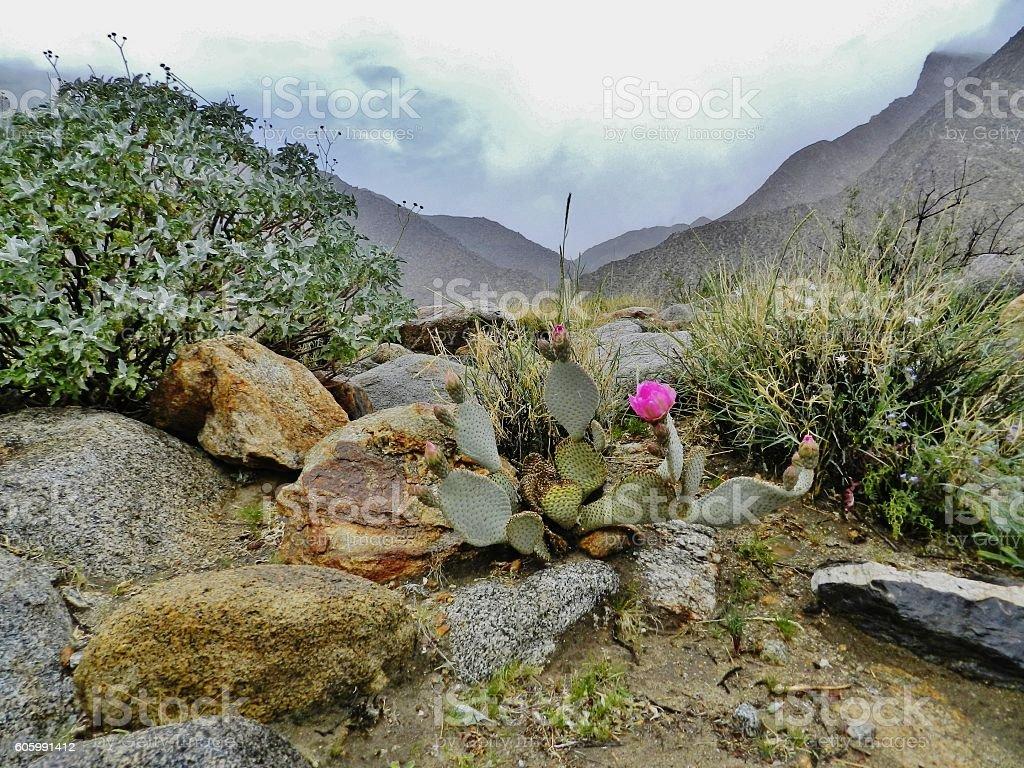 Looking towards rainy mountains in Anza-Borrego desert stock photo