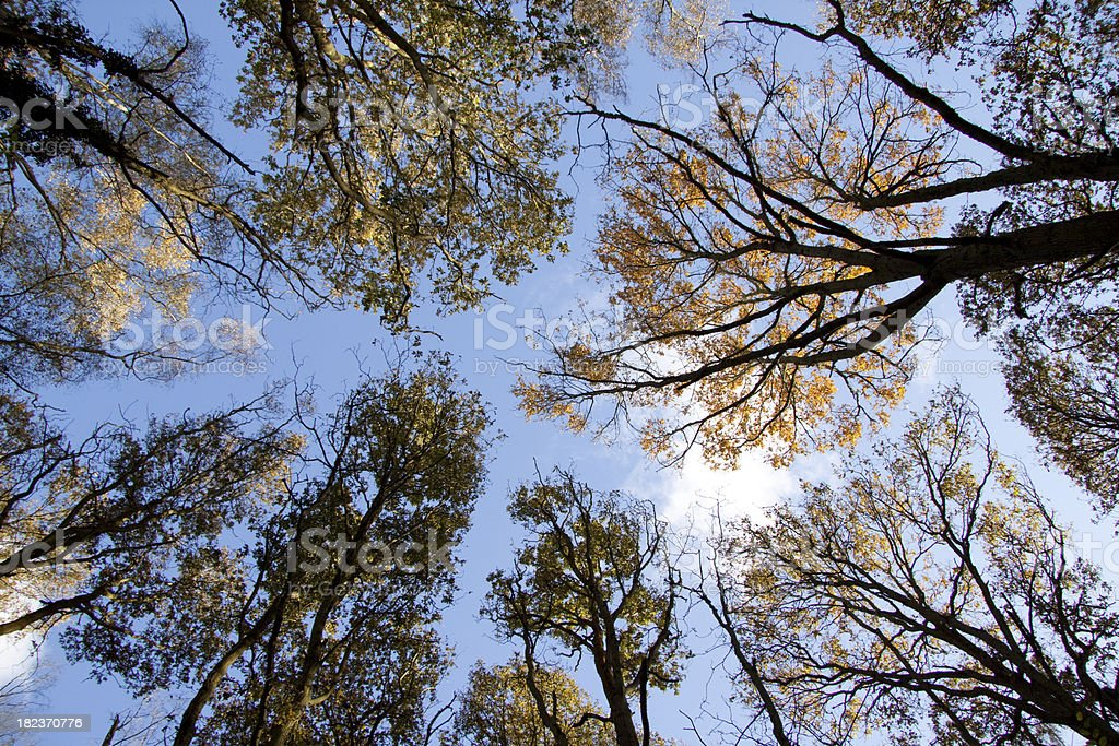 Looking up at a blue sky in forest stock photo