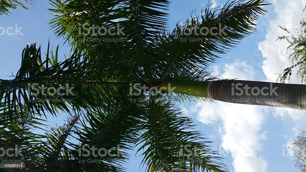 Looking up at a palm tree stock photo