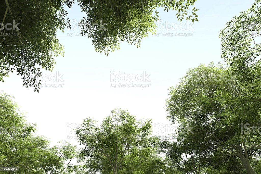 Looking up at treetops and the sky royalty-free stock photo