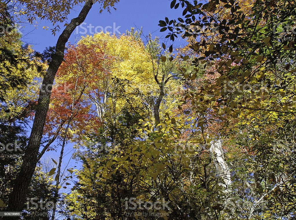 looking up in autumn royalty-free stock photo
