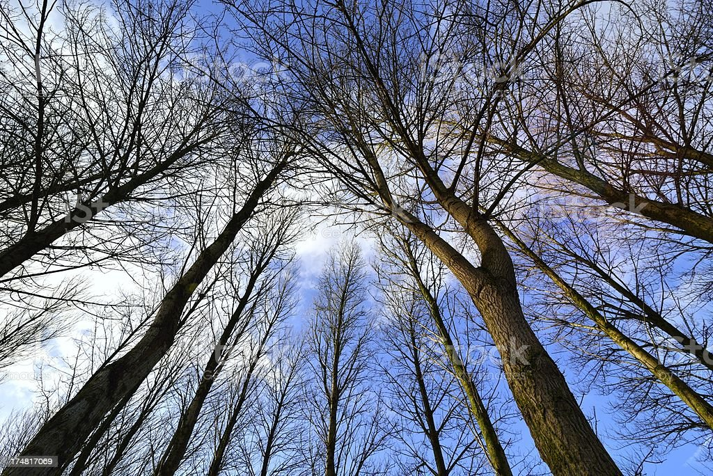 Looking up in the woods royalty-free stock photo