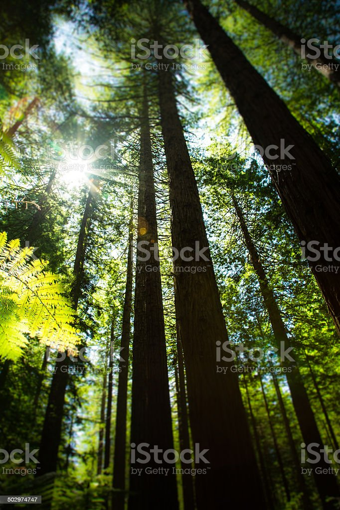 Looking up into tree foliage in Tropical Forest stock photo