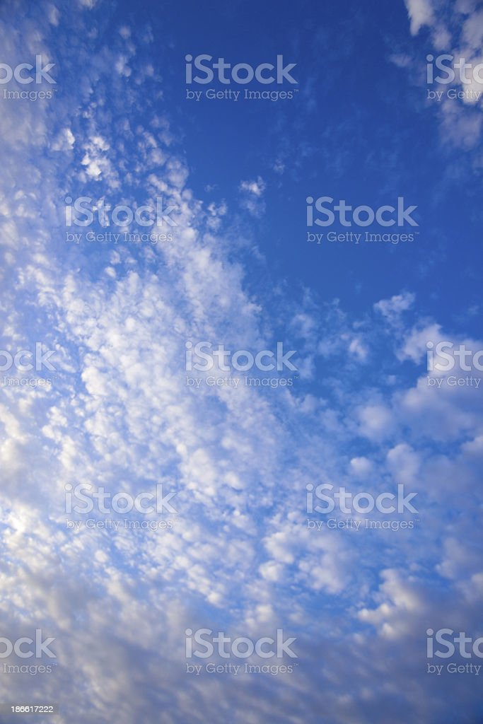 Looking Up royalty-free stock photo