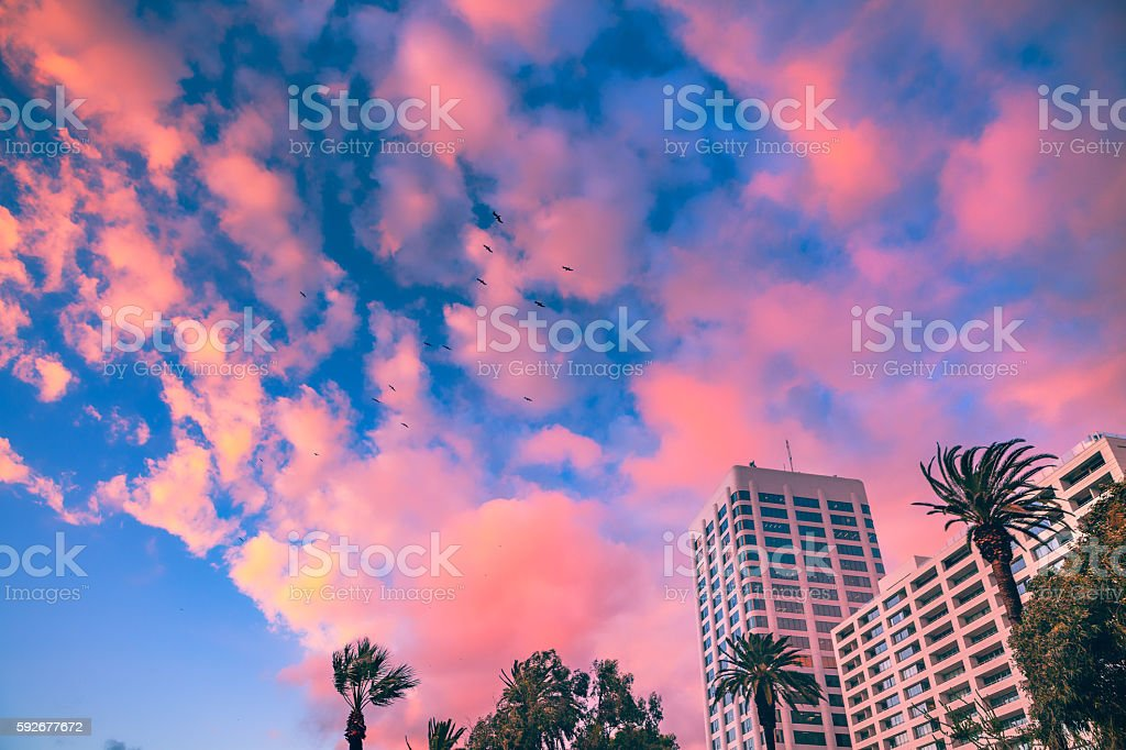Looking Up, Pink Clouds, Windswept Palms & High Rise Buildings royalty-free stock photo