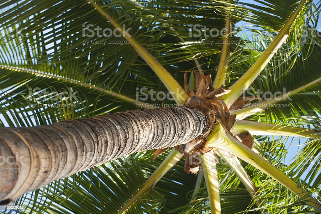 Looking Up To Palm Tree stock photo