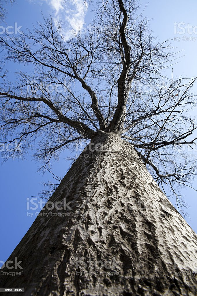 looking up to sky through tree branches stock photo