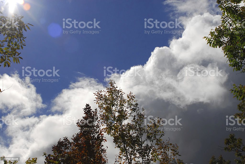 Looking up to sun through trees. royalty-free stock photo