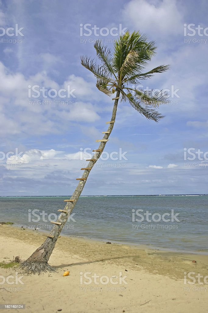 Lookout Palm Tree royalty-free stock photo