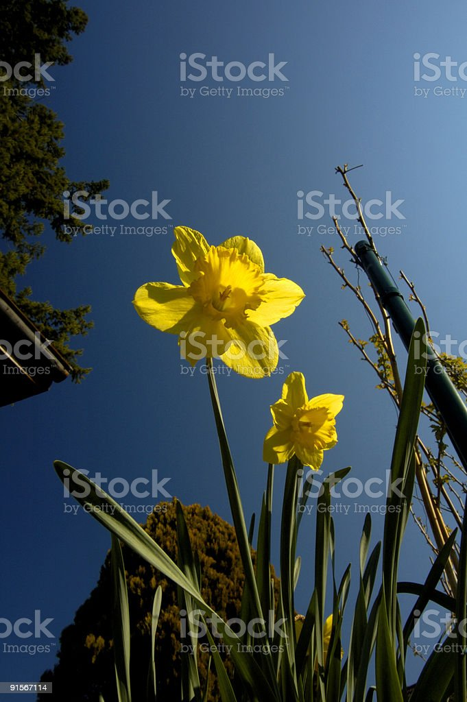Looks like it's going to be a fine day. royalty-free stock photo