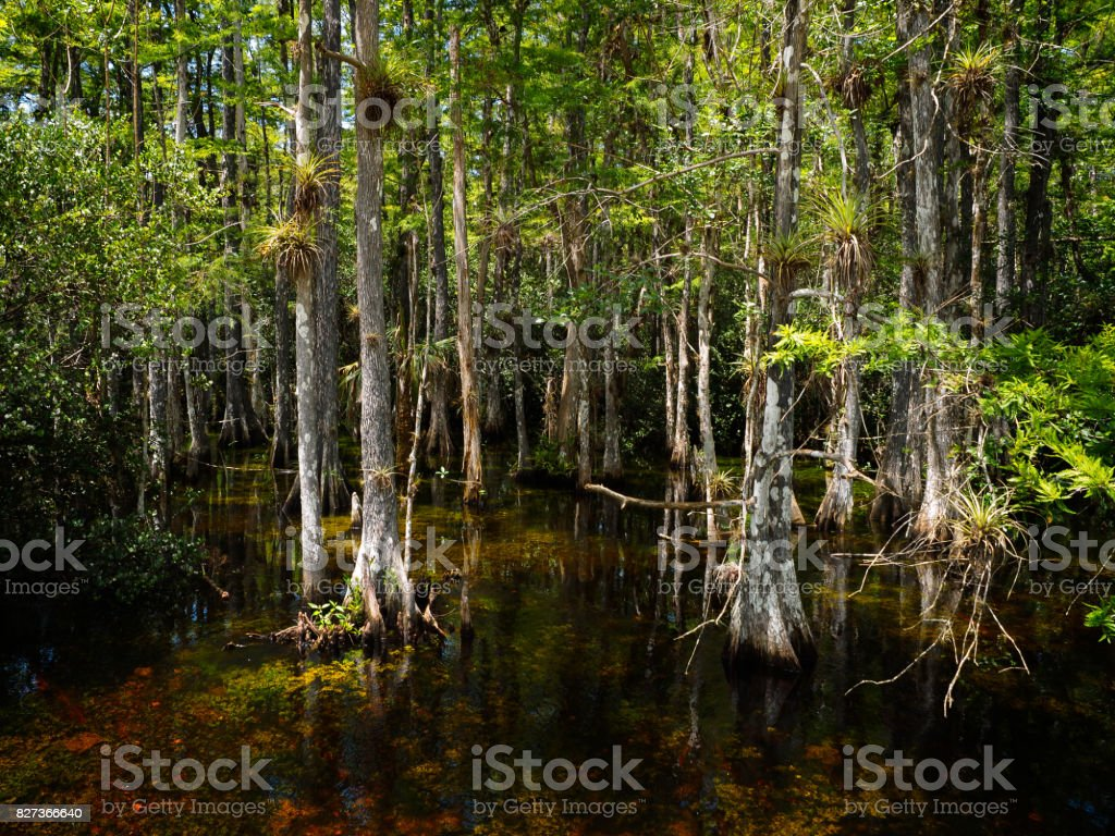 Loop Road, Big Cypress National Preserve stock photo