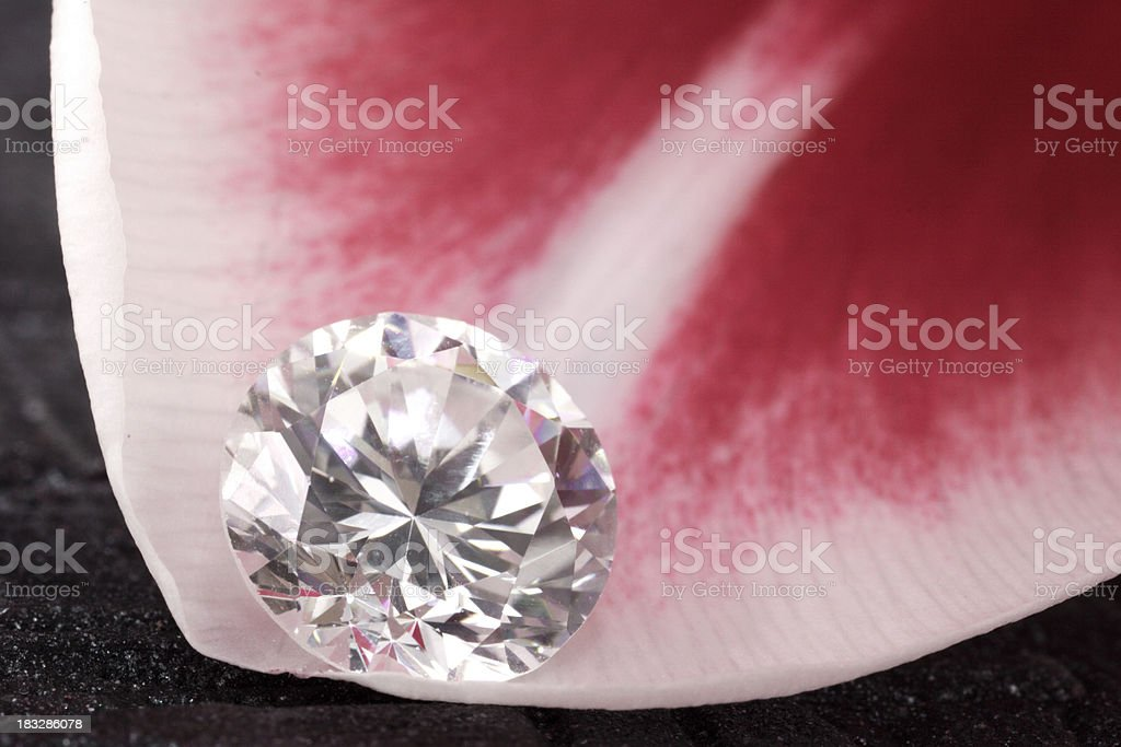 Loose Diamond on Tulip Flower royalty-free stock photo