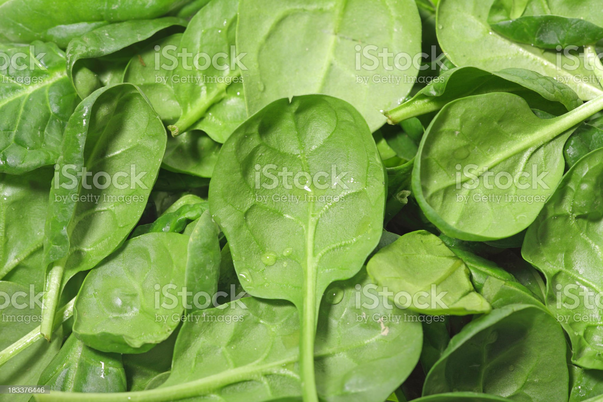 Loose spinach leaves background royalty-free stock photo