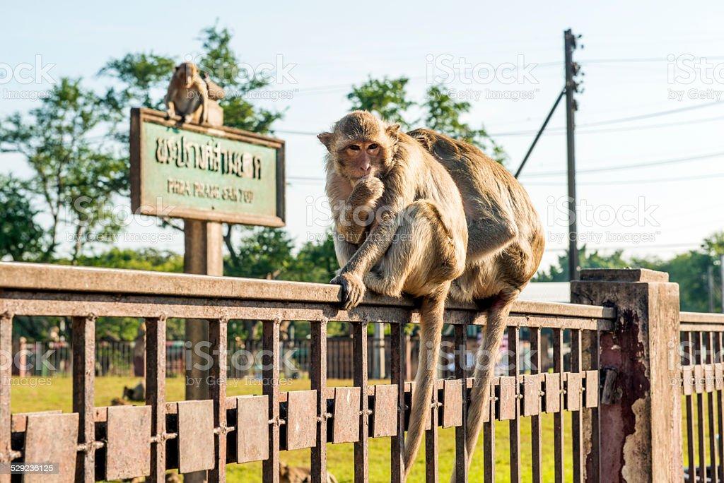 Lopburi Thailand Monkey Temple stock photo
