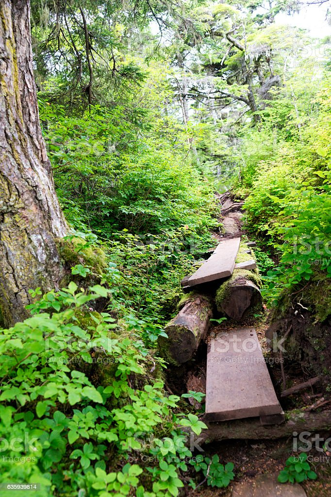 Lopsided trail in Juneau rainforest stock photo