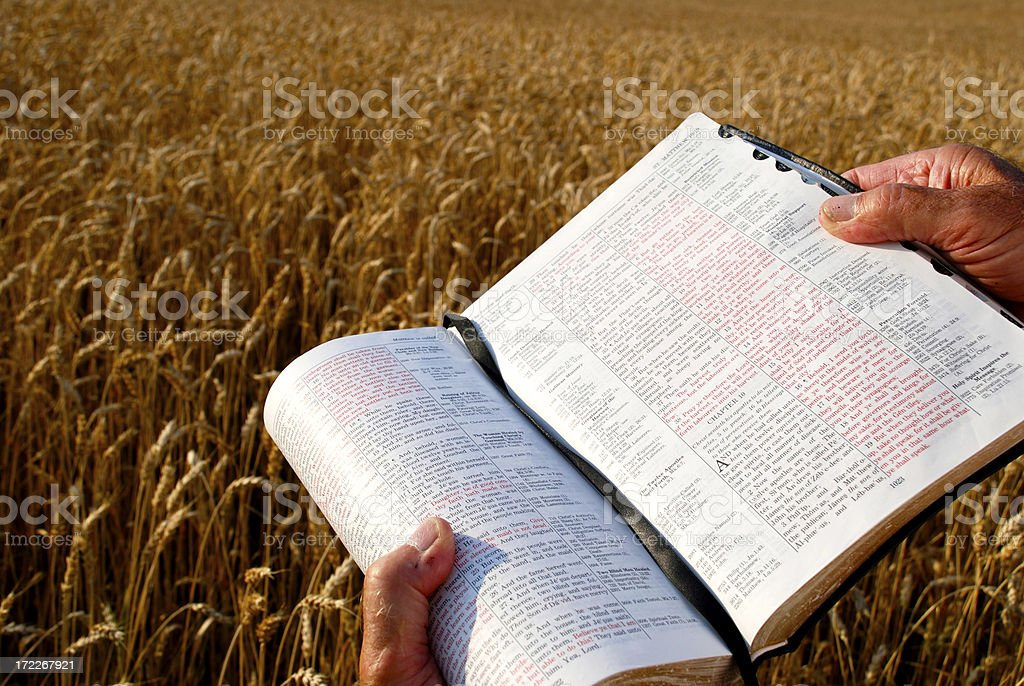 Lord Of The Harvest stock photo