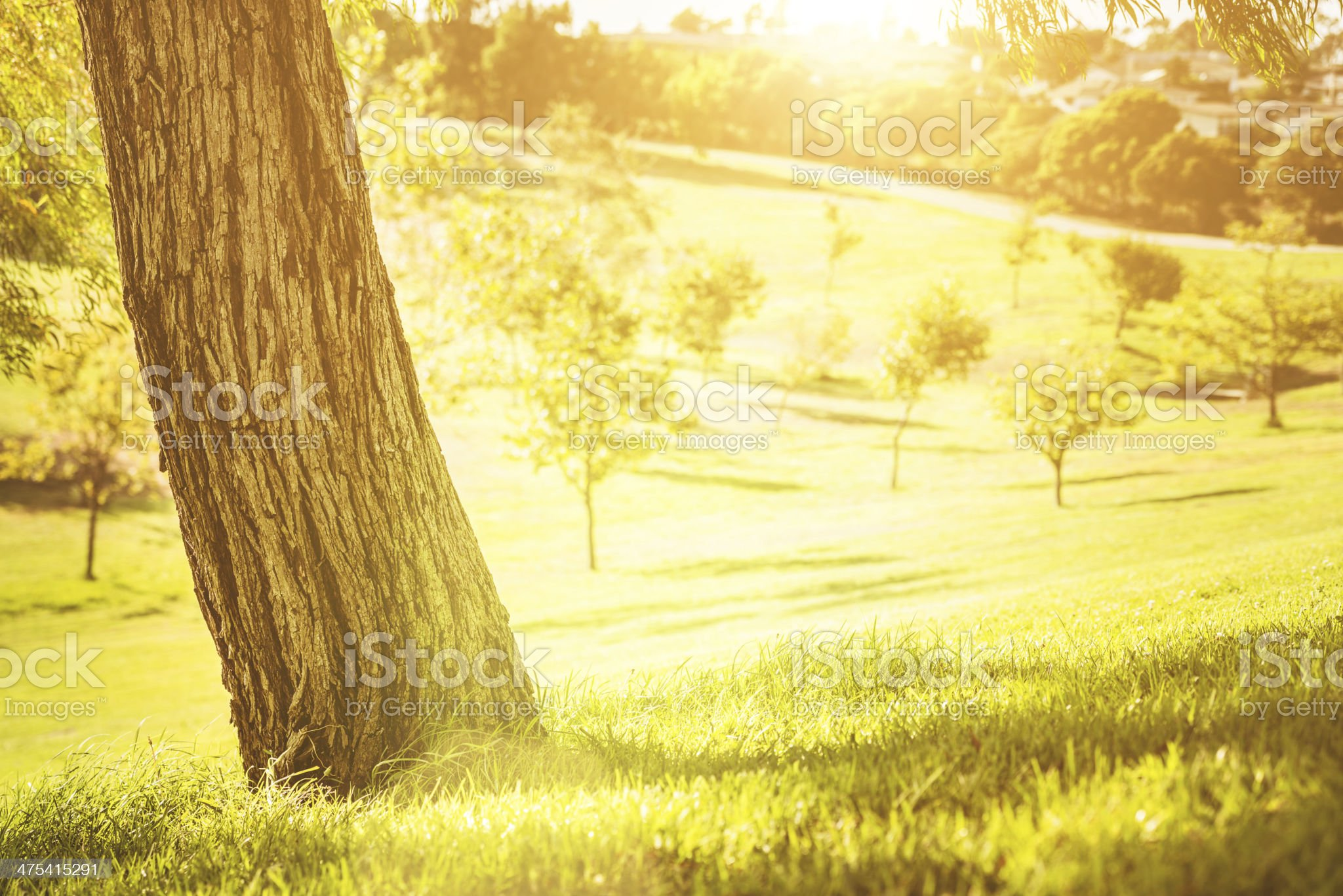 Los angeles park royalty-free stock photo