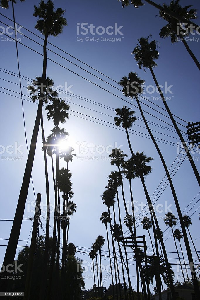 Los Angeles Street Lined With Palm Trees royalty-free stock photo