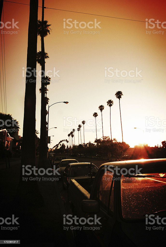 Los Angeles Sunset Lined With Palm Trees At Sunset royalty-free stock photo