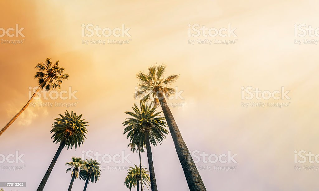 Los Angeles, West Coast Palm Tree Sunshine stock photo