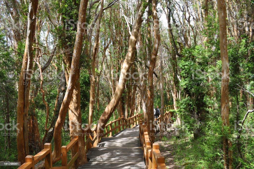 Los Arrayanes National Park stock photo