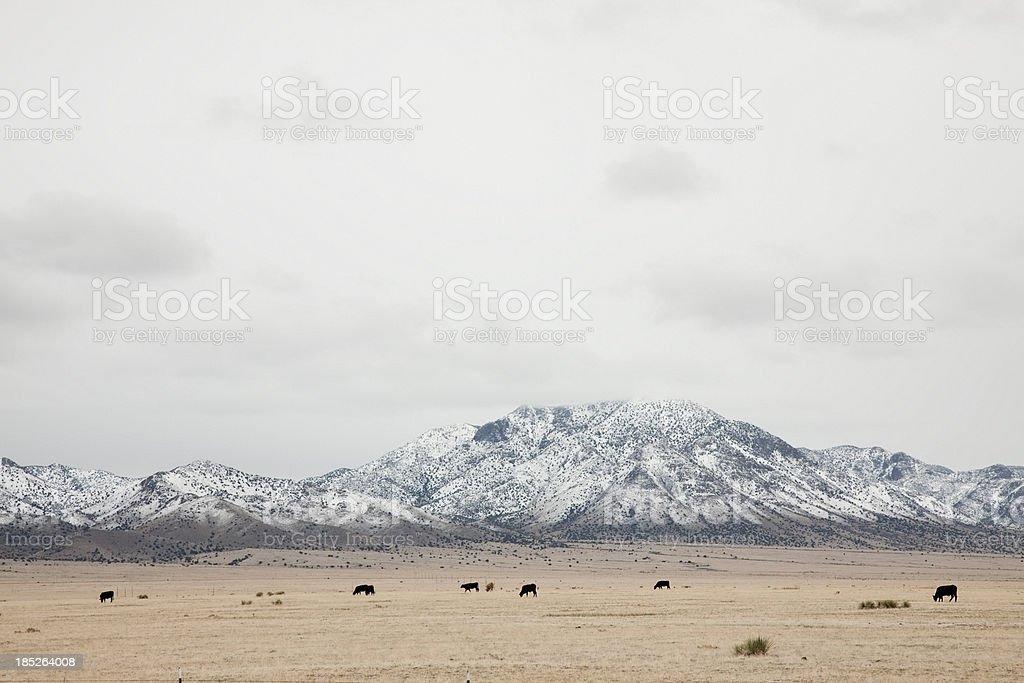 Los Piños Mountains with Snow stock photo
