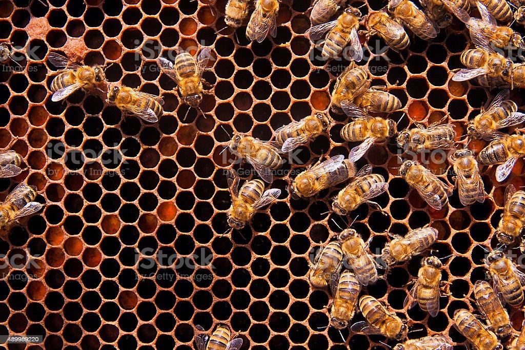 Ð ¡perder de vista de las trabajo bees on panal. foto de stock libre de derechos