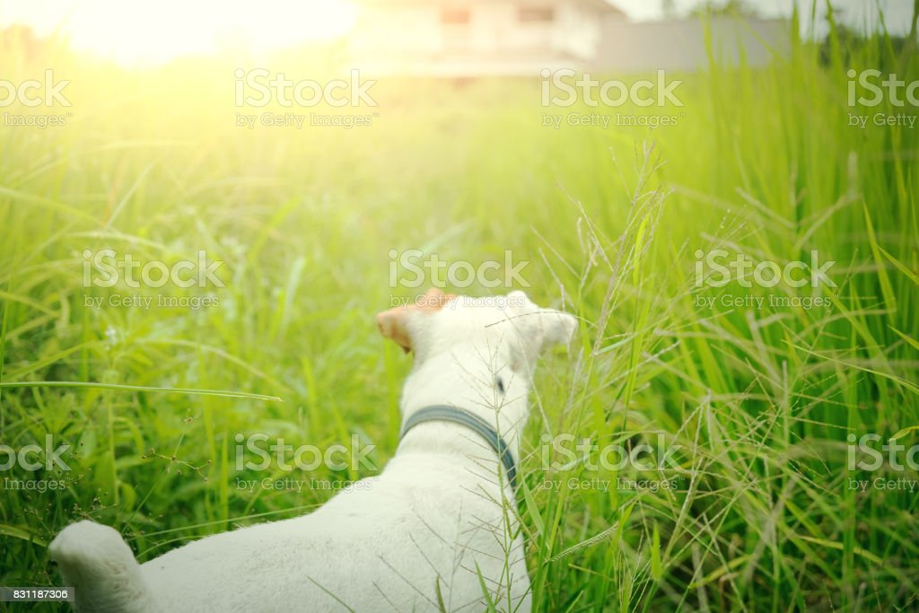 Lost dog find its house. Pet and animal. stock photo