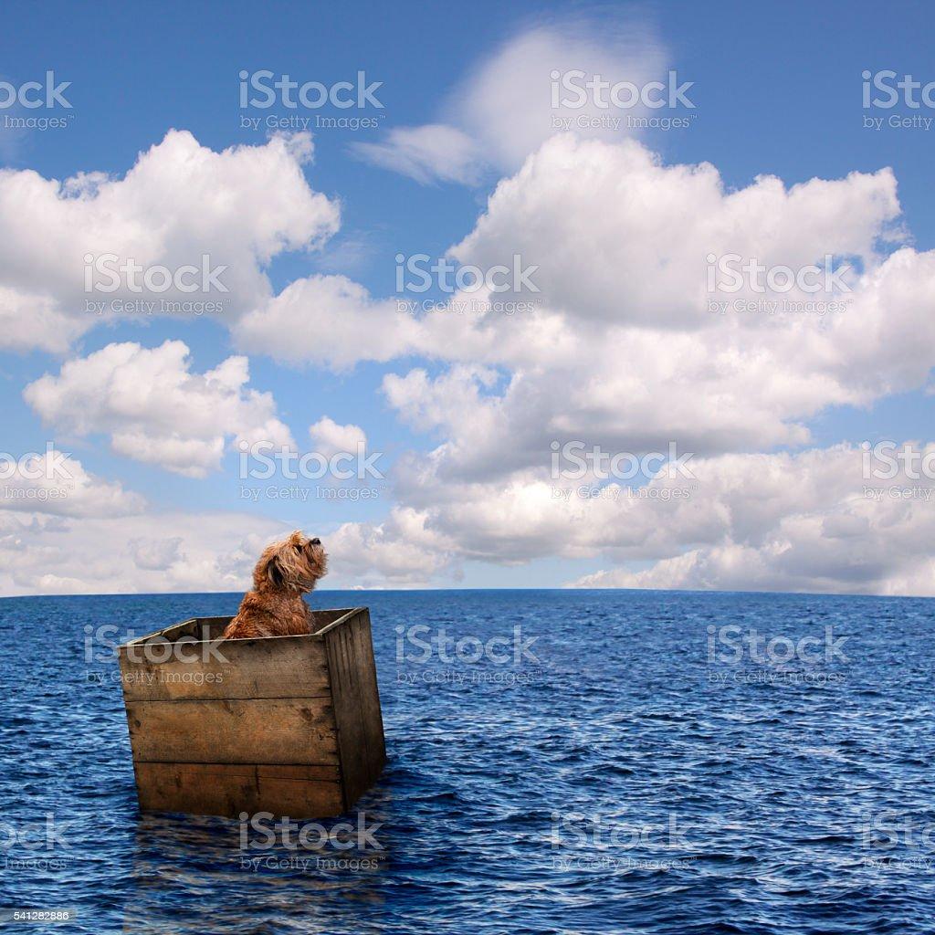 Lost Dog in Ocean stock photo