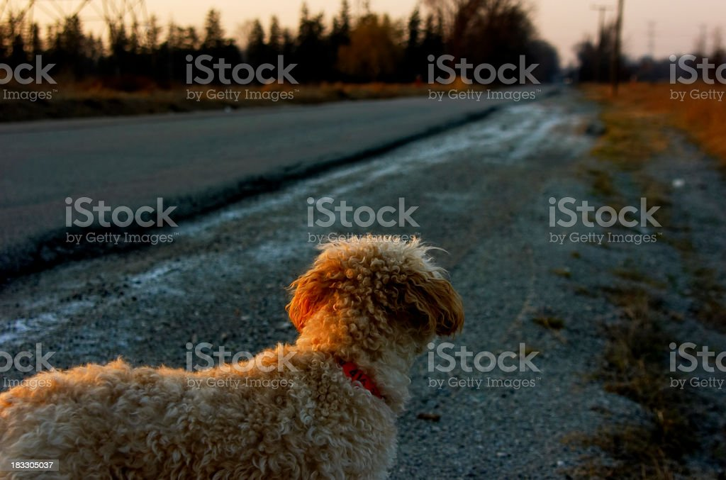 Lost dog looking towards the end of the road stock photo