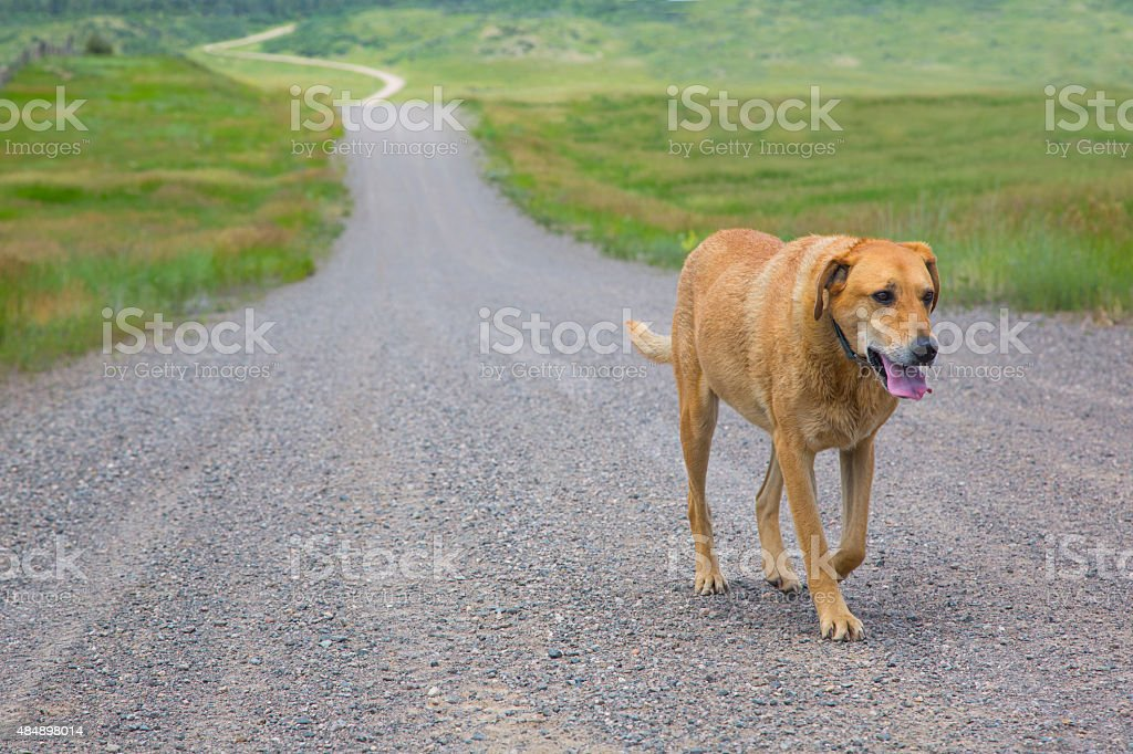 lost dog stock photo