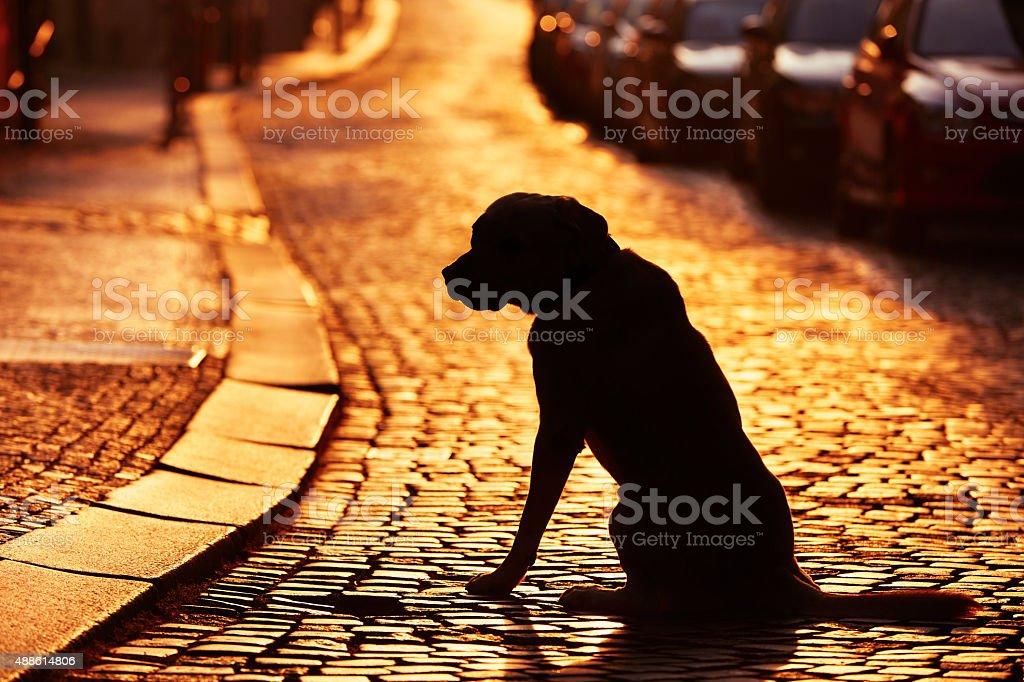 Lost dog stock photo