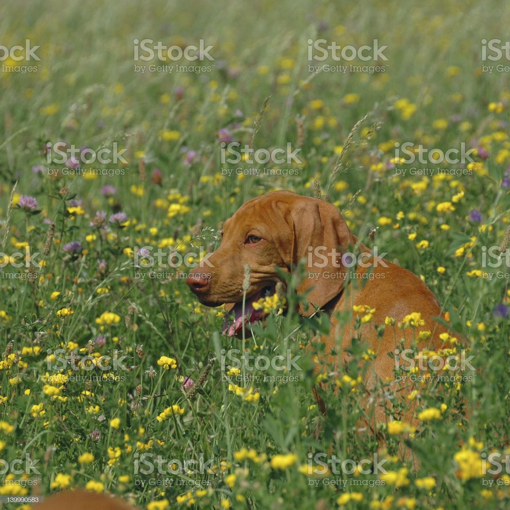 Lost In Flowers royalty-free stock photo