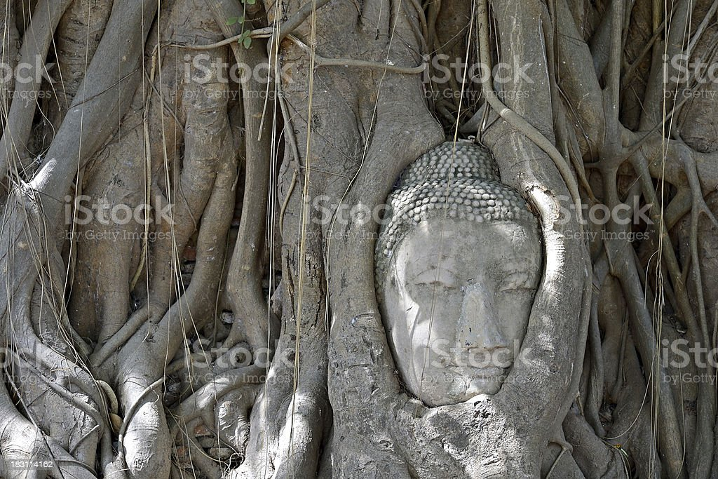 Lost in meditation royalty-free stock photo