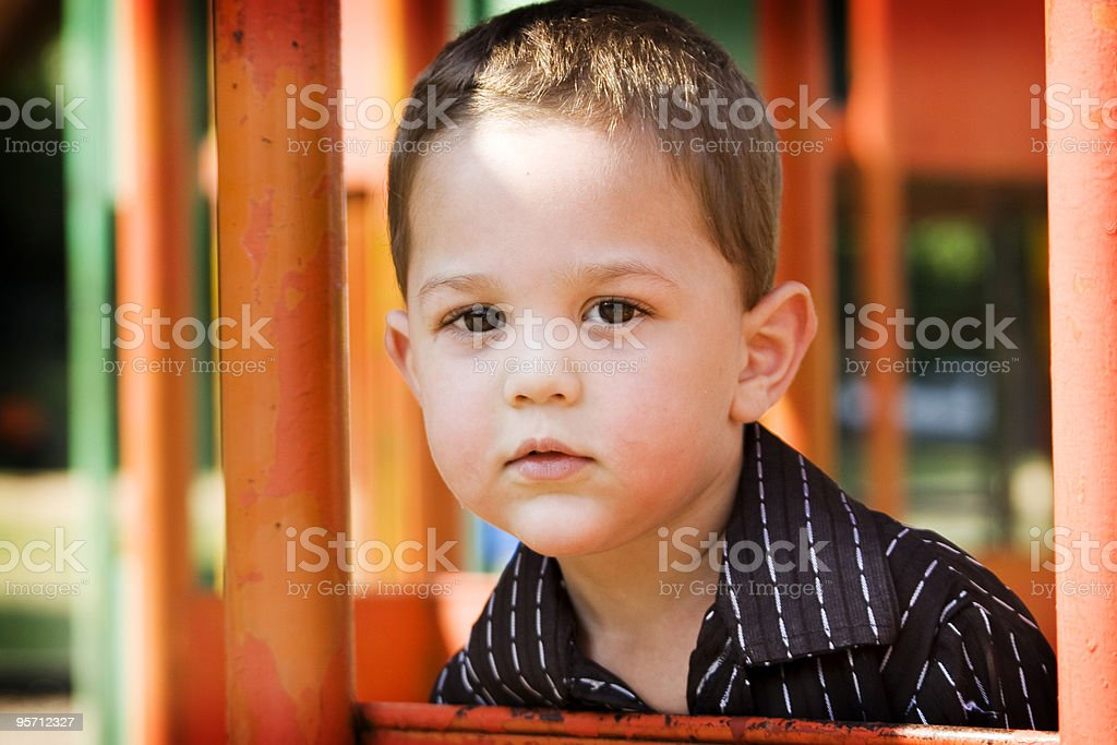 Lost in the Jungle royalty-free stock photo
